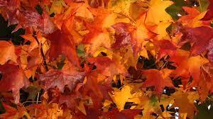 Fall Themed Wallpaper on WallpaperSafari