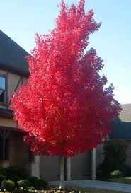 ... Good Trees For Front Yard 12 17 Best Ideas About Trees To Plant On  Pinterest ...
