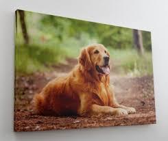 Hunde Golden Hund Günstig Online Kaufen Bei Yatego
