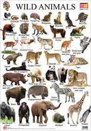 wild animals chart. Exellent Animals Buy Wild Animals Educational Wall Charts Book Online At Low Prices In  India  Reviews U0026 Ratings  Amazonin Throughout Chart L