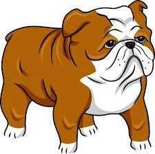 cute bulldog clipart. Modren Bulldog Illustration Featuring A Cute English Bulldog Stock Photo And Clipart G
