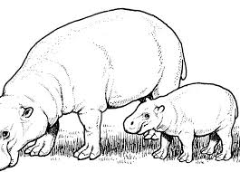 Cute Hippo Coloring Pages Hippo Coloring Cute Hippo Colouring Page