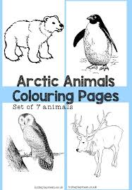 Arctic Animals Colouring Pages | Arctic animals, Worksheets and ...