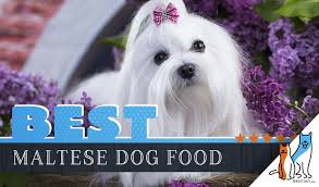 Teacup Maltese Growth Chart 15 Best Dog Foods For Maltese Our 2019 In Depth Feeding Guide