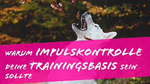 Oder gibt es vielleicht sogar probleme, wenn man es verpasst, dem welpen das treppen laufen beizubringen. Impulskontrolle Beim Hund Hundeschule Frankfurt