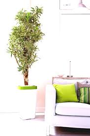 plants feng shui home layout plants. Feng Shui Plants For Office. Improve Indoor Air And Create Afortable Atmosphere Home Layout