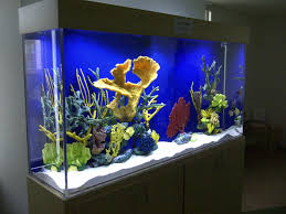 Cordial Huge For Custom Some Facts To Find Out How To Organize Our Aquarium  Part in