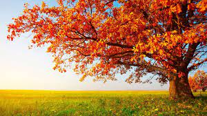 Plain Autumn Wallpapers - Top Free ...
