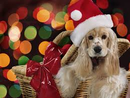 christmas puppies wallpaper.  Puppies Christmas Puppies HD Wallpapers Throughout Wallpaper