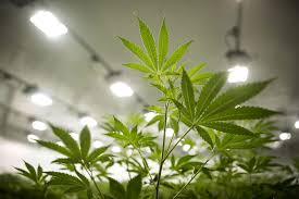 Altria Shows Theres A Better Way To Value Cannabis Stocks