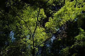 Wallpaper : Japan, sunlight, nature, reflection, branch, green, jungle,  Leica, Tokyo, rainforest, Jp, tree, autumn, leaf, flower, vegetation,  shinjuku, ...