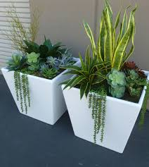 here are the succulents in fiberglass containers that feature on the show a to