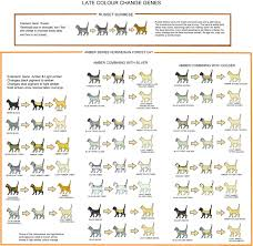 Cat Colour And Pattern Charts And Article Very Detailed And