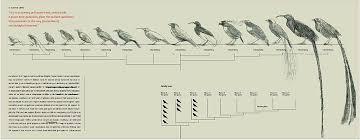 Bird Taxonomy Chart Scientific Taxonomy Birds Chart Information About Birds