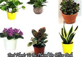 great office plants. Great Office Desk Plants Best Picks .