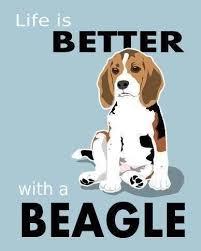Beagle Quotes. QuotesGram via Relatably.com