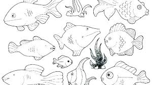 Rainbow Fish Coloring Pages Rainbow Fish Coloring Pages For Rainbow
