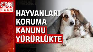 Hayvanlara karşı işlenen suçlara 4 yıla kadar hapis cezası verilebilecek -  YouTube