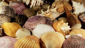 How To Display A Seashell Collection Our Pastimes