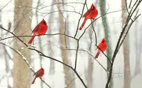 12++ Winter Bird Computer Wallpaper ...