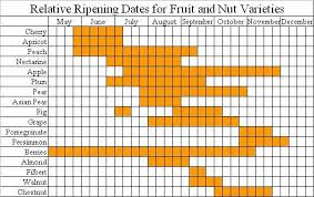 This Chart Shows The Relative Ripening Dates For Different