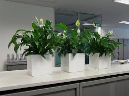 best indoor plants for office. Source: Gaddys Indoor Plant Hire Best Plants For Office