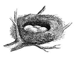 Free Vintage Images - Nest with Eggs - The Graphics Fairy