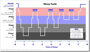 Ideal Sleep Cycle Chart Understanding Sleep For Optimal Recovery Productivity By