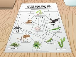 Create Flow Charts That Show Four Different Food Chains How To Draw A Food Web With Pictures Wikihow