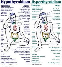 thyroid disorders my hair doctor