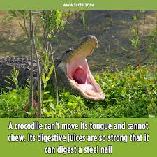 Image result for crocodile tongue images