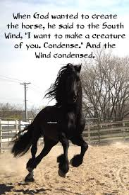 60 Best Inspirational Horse Love Quotes Funny Love Sayings Images