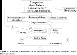 Pathophysiology Of Chf Cheyne Stokes Respiration In Patients With Congestive Heart Failure