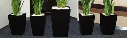 office plant displays. wonderful office office plant displays with s