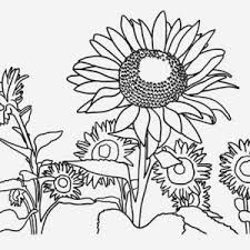 Small Picture Sunflower and a Girl Coloring Page Sunflower and a Girl Coloring