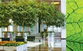 Interior landscaping office Modern Corporate Office Sign Store Foliage Design Services Provide Professional Interior Plantscapes Services In Many Cities Throughout The Us Services Include The Design John Mini Distinctive Landscapes Interior Plants Commercial Landscaping Interior Landscape Design