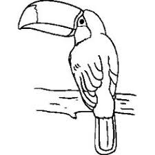 Small Picture tucan outline Toucan Printable Templates Coloring Pages