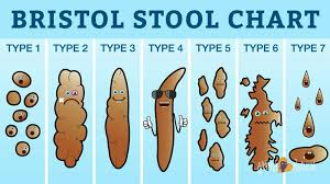Faeces Bristol Stool Chart What The Shape Of Your Faeces Says About You Study Listwand