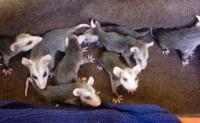 Rainbow Wildlife Rescue And Wildlife Rehabilitation In Texas