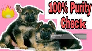 German Shepherd dog In Hindi ...