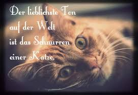 Katzensprüche Little Cats Kleine Katzen Katzensprüche Katzen