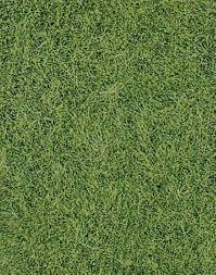 wild grass texture. Wild Grass Texture T