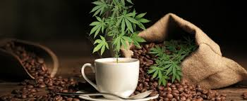 can you take weed out of coffee shops amsterdam