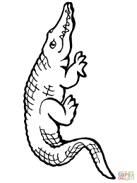 Small Picture American Alligator coloring page Free Printable Coloring Pages