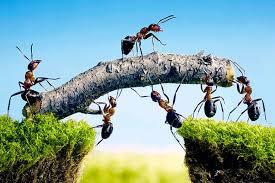 Resultado de imagen para hormiga