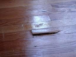 dog on wood floor plain design dog urine on wood floors the box house our dog on wood floor