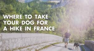 where to take your dog for a hike in france