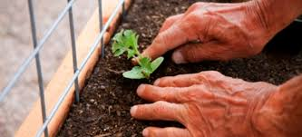 creating the right soil mix for square foot gardening doityourself