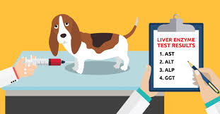 What That Liver Enzyme Test Is Telling You Dogs Naturally