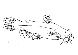 Small Picture Catfish Big Grin Coloring Pages Best Place to Color